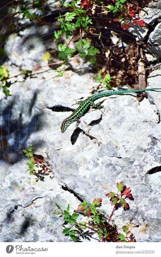 Nature Green Summer Animal Small Elegant Rock Bushes Wild Hide Analog Wild animal Crawl Reptiles Camouflage