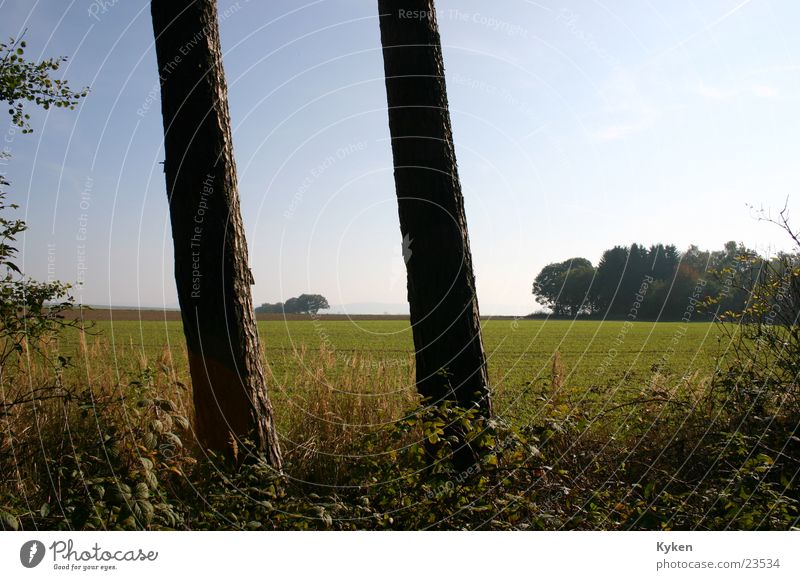 Pillars of Nature Tree Field Meadow Vantage point Green Leaf Autumn steady Far-off places Detail