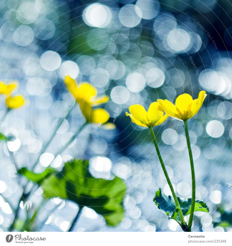 Dance of the Yellow Flowers and Bokeh Nature Water Green Beautiful Plant Leaf Meadow Spring Field Exceptional Wild Natural Island Wet