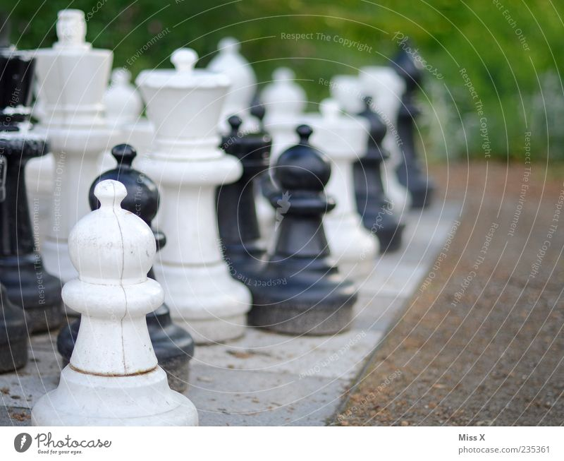 garden chess Leisure and hobbies Playing Board game Chess Garden Park Concentrate Planning Chess piece Chessboard Intellect Black White outdoor chess
