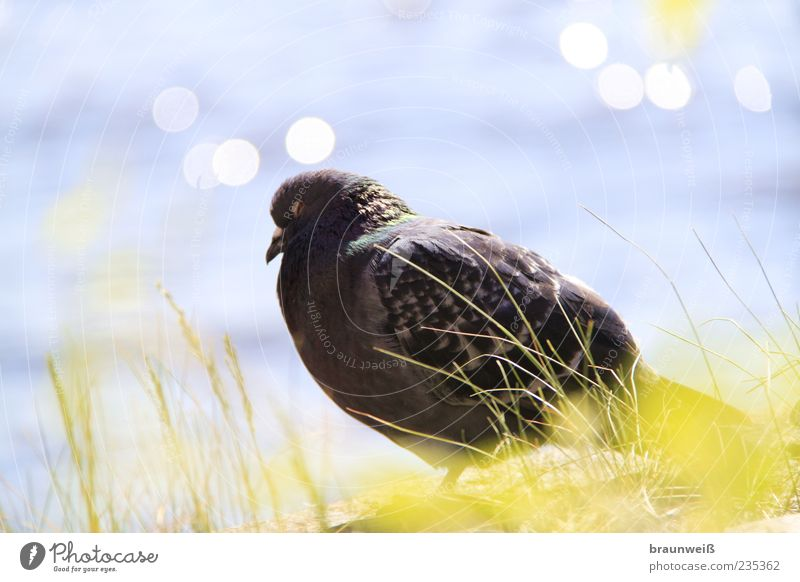 Nature Water Calm Animal Grass Head Bright Bird Environment Sit Feather Pigeon Patient