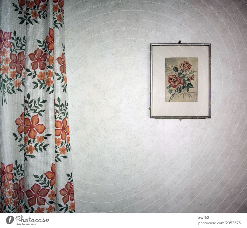 Art and stuff Living or residing Image Drape Hang Old Gloomy Idyll Style Stagnating Grief Sadness Past Transience Lose Rose Retro Kitsch Wallpaper Decoration