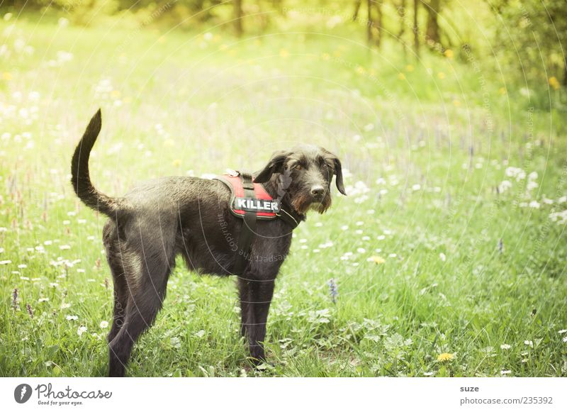 Dog Nature Green Summer Animal Black Meadow Grass Funny Garden Wait Stand Beautiful weather Cute Pelt Pet