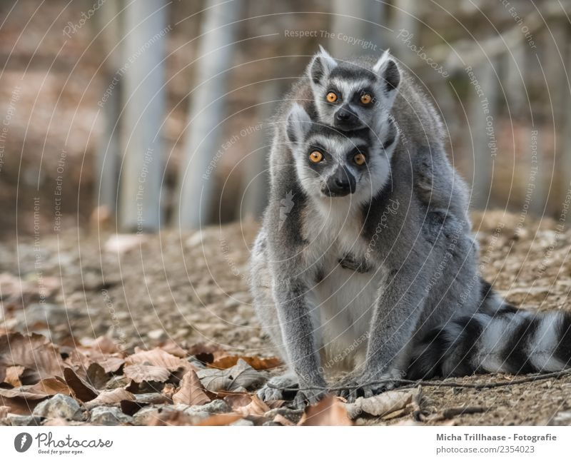 Nature White Sun Tree Animal Leaf Forest Baby animal Eyes Gray Orange Illuminate Pair of animals Glittering Wild animal Beautiful weather