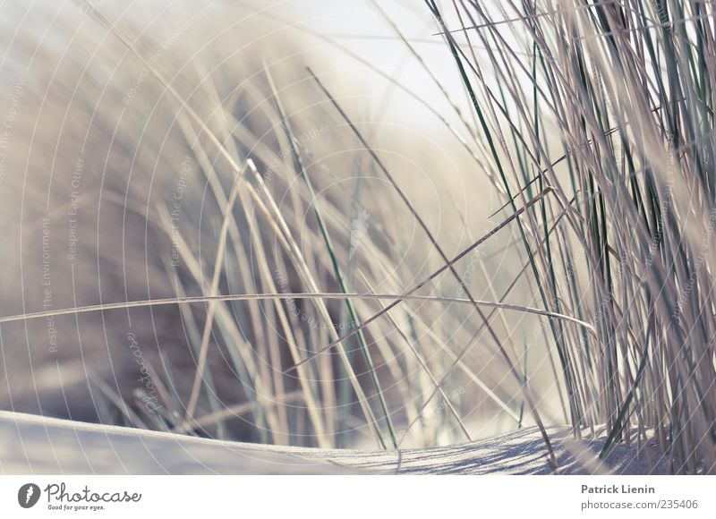 Spiekeroog Dream a little dream Beautiful Relaxation Calm Beach Ocean Island Sand Wind Grass Lie Near Moody Esthetic Fragrance Loneliness Elegant Discover Joy