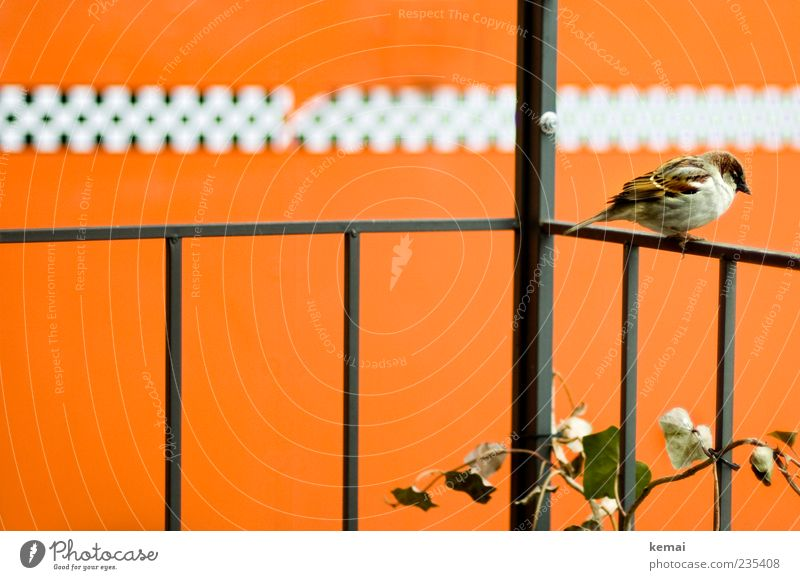 Odd number of persons etc. Plant Animal Wild animal Bird Wing Sparrow 1 Handrail Sit Orange Masculine Individual Colour photo Subdued colour Exterior shot Day