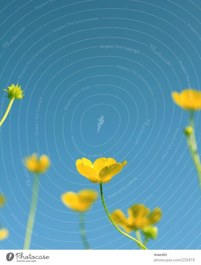 Sky Nature Blue Plant Summer Flower Leaf Yellow Landscape Grass Spring Blossom Delicate Stalk Cloudless sky Blue sky