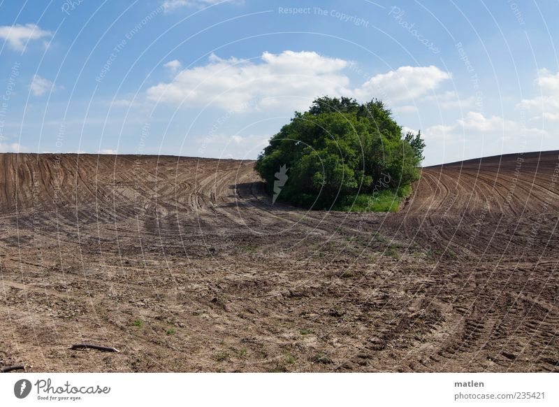 from the field Landscape Earth Sky Clouds Beautiful weather Bushes Field Blue Brown Green Tracks Calm Island Subdued colour Exterior shot Copy Space bottom