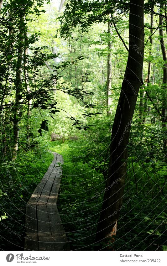 Nature Green Tree Plant Summer Leaf Calm Forest Environment Wood Lanes & trails Grass Spring Wet Bridge Bushes