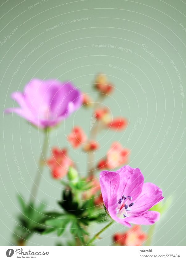 Nature Green Plant Summer Flower Leaf Spring Blossom Violet Stalk Bouquet Foliage plant Spring fever Wild plant