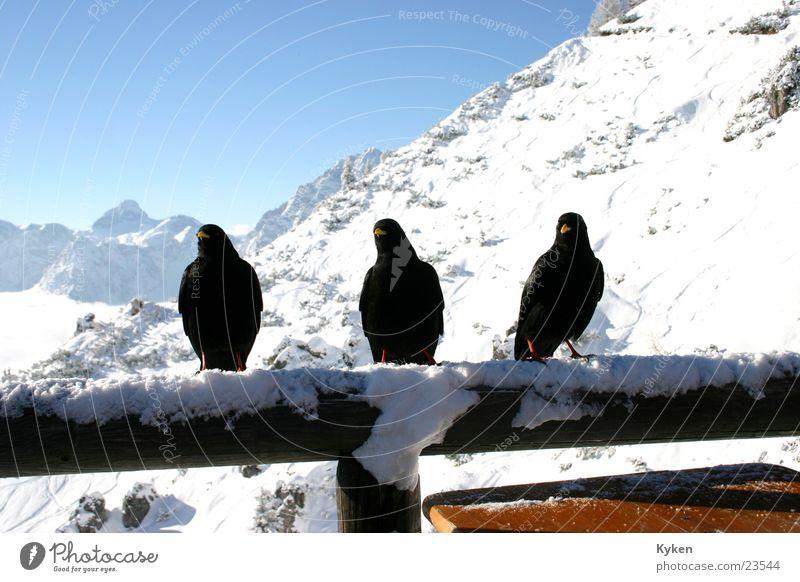 White Sun Blue Winter Black Clouds Cold Snow Mountain Bird Vantage point