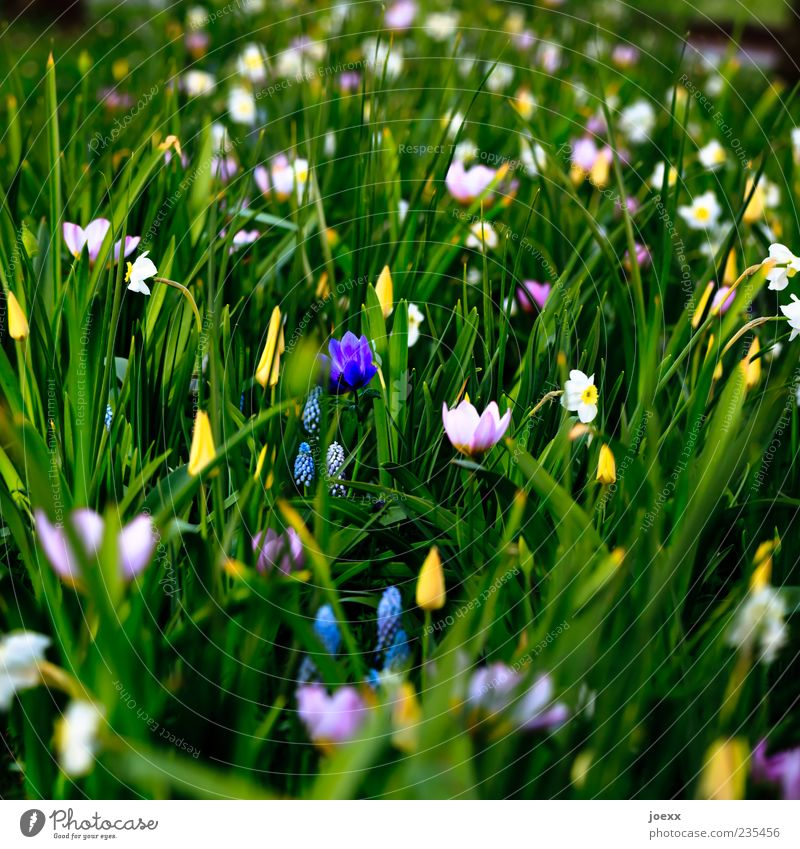 somber Nature Spring Flower Beautiful Blue Yellow Green Violet Pink White Tulip Wild daffodil Colour photo Multicoloured Exterior shot Deserted Day Shadow