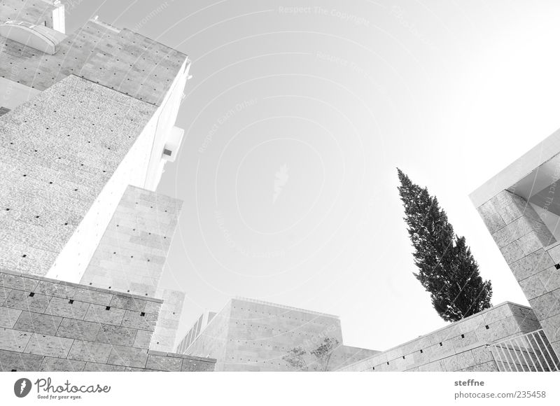 City Tree Summer Wall (building) Architecture Stone Wall (barrier) Concrete Modern Future Manmade structures Fir tree Museum Futurism Portugal Lisbon