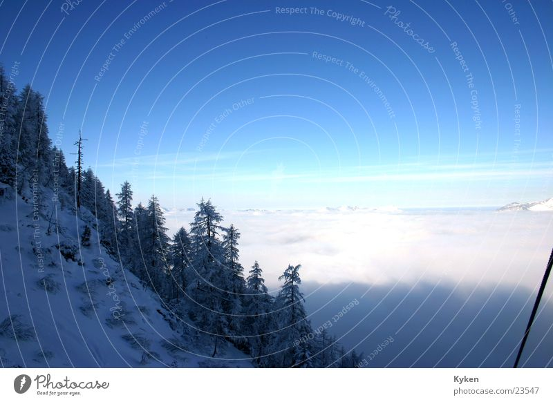 the second outlook Winter White Tree Cold Fir tree Slope Fog Mountain Blue Snow