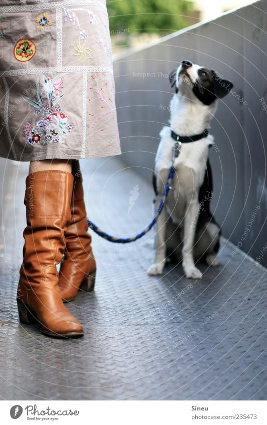 What about the reward now? Woman Adults Legs 1 Human being Skirt Boots Animal Dog Dog lead Neckband Sit Stand Wait Curiosity Smart Love of animals Patient