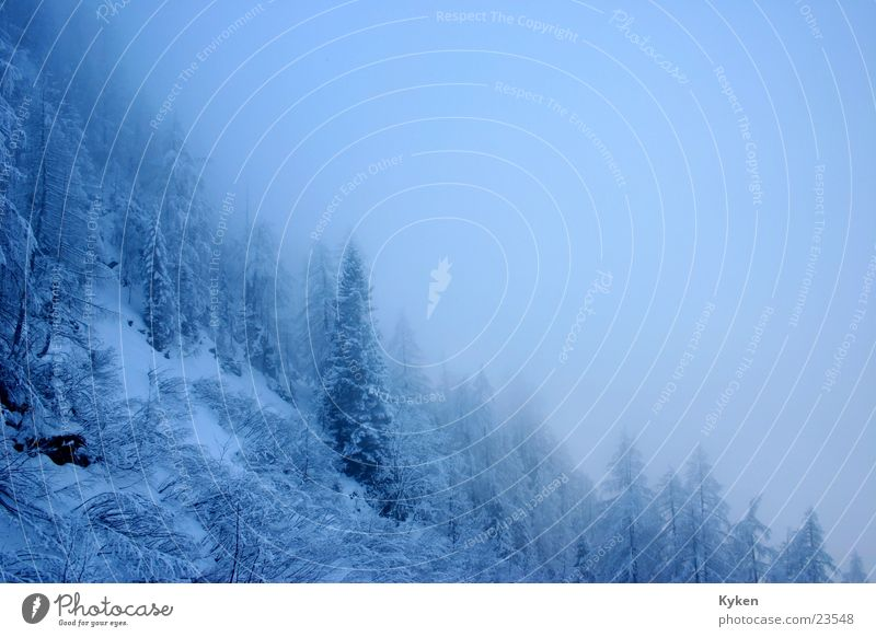outlook Winter White Tree Cold Fir tree Slope Fog Mountain Blue Snow