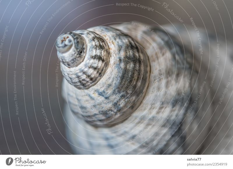 leaning tower Snail Snail shell Esthetic Blue Brown Gray Beginning Design Perspective Protection Symmetry Spiral Rotated Tower Crazy Tilt Structures and shapes