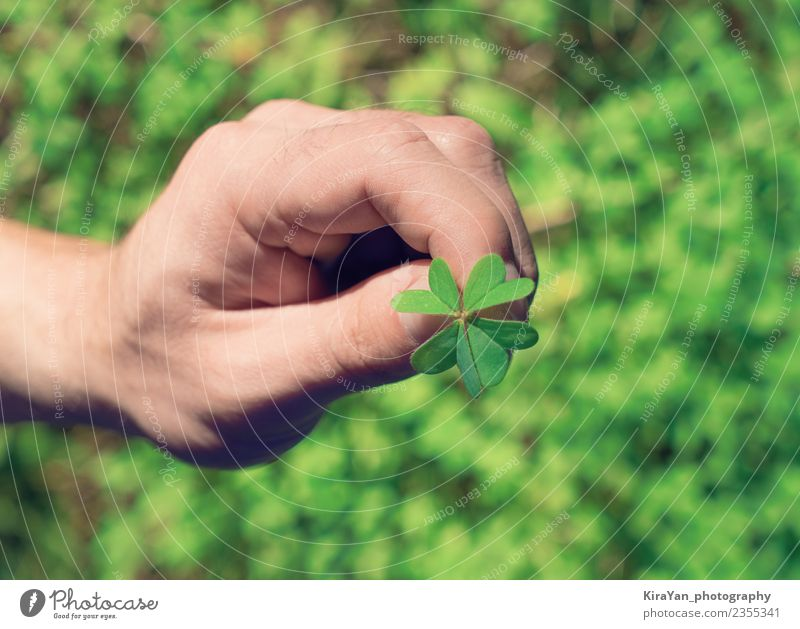 Hand holds agreen leaf of clover Lifestyle Happy Summer Decoration Feasts & Celebrations Man Adults Fingers Nature Plant Grass Leaf Happiness Natural Green Hope