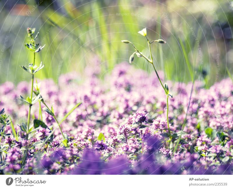 flowers Nature Plant Beautiful weather Flower Grass Bushes Leaf Blossom Garden Park Meadow Fragrance Blue Violet Spring fever Esthetic Life