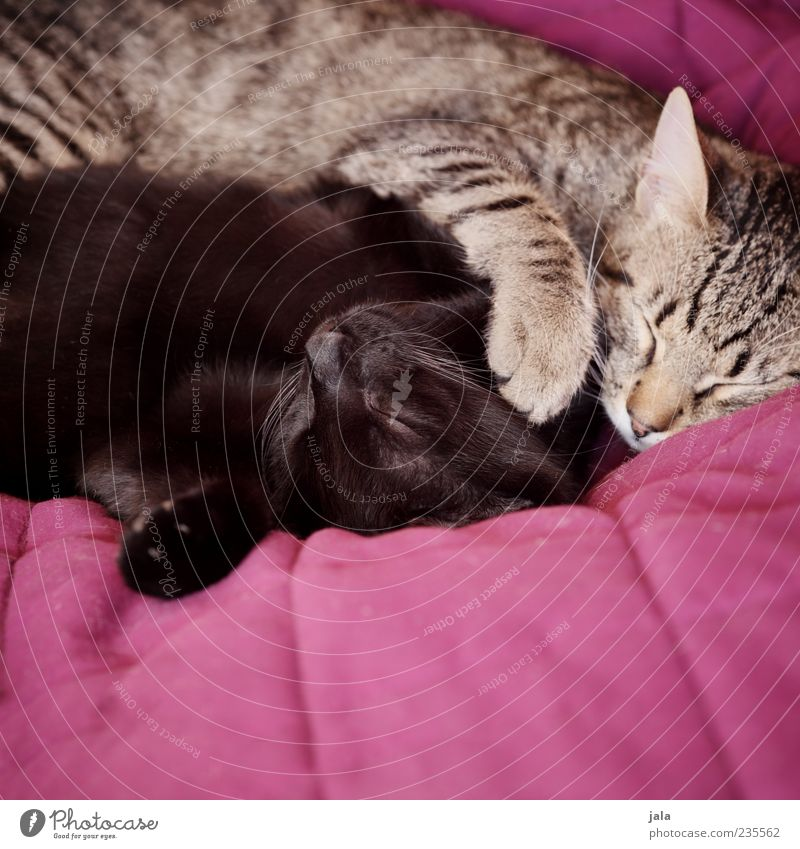 cuddler Animal Pet Cat Animal face Paw 2 Love Lie Sleep Happy Contentment Safety (feeling of) Agreed Love of animals Loyalty Cuddling Colour photo Interior shot