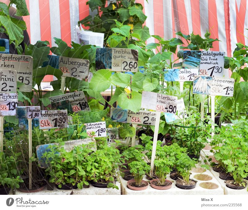 Delicate shoots Herbs and spices Spring Plant Green Price tag Signs and labeling Flowerpot Pot plant Parsley Many Farmer's market Vegetable market Market stall