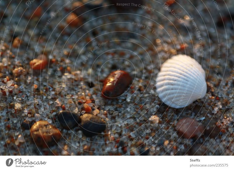 flotsam in the evening light Baltic Sea Flotsam and jetsam Mussel Baltic beach stones Well-being Relaxation evening mood tranquillity Mussel shell Evening rest