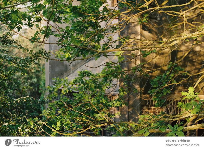 Nature Tree Environment Wall (building) Spring Wall (barrier) Facade Branch Beautiful weather