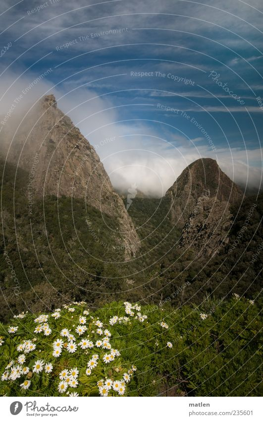 Sky White Green Blue Plant Clouds Grass Mountain Landscape Rock Peak Beautiful weather Conical Wild plant