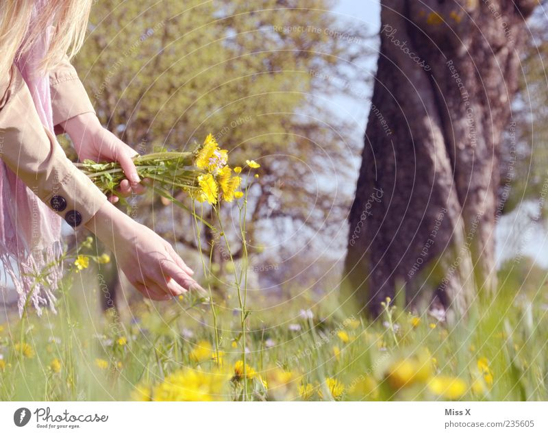 bouquet Well-being Contentment Relaxation Calm Arm Hand Nature Plant Spring Summer Beautiful weather Tree Flower Grass Leaf Blossom Park Meadow Blossoming