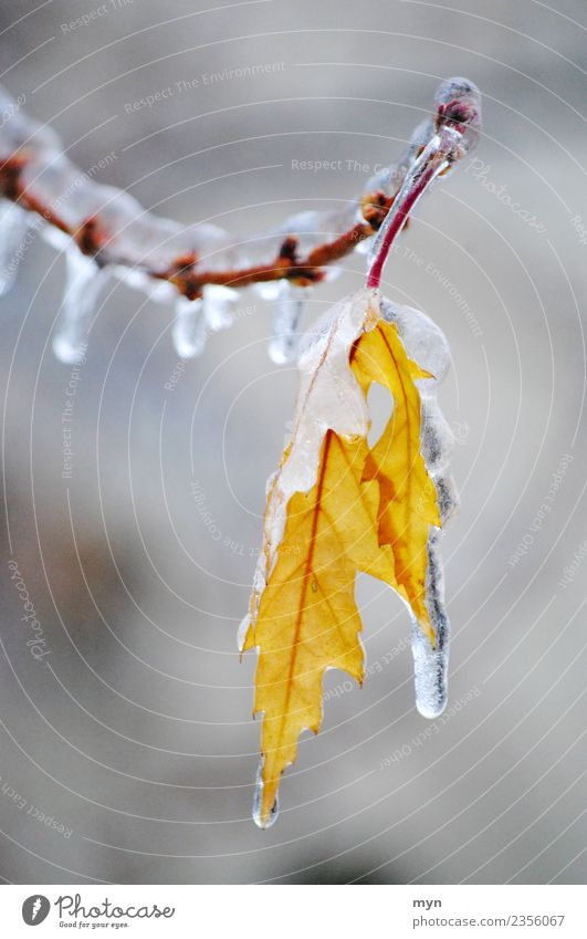 Frozen II Climate Bad weather Rain Ice Frost Plant Tree Bushes Leaf Foliage plant Freeze Cold Yellow Sadness Distress Icicle Drops of water Winter Winter mood