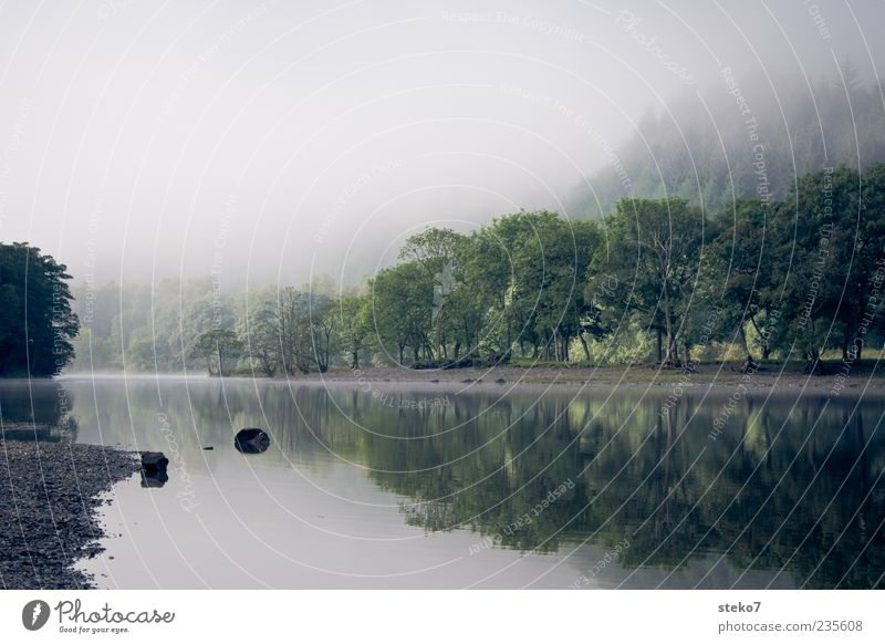 Tree Calm Forest Relaxation Fog Natural River River bank Haze Surface of water Scotland Water reflection