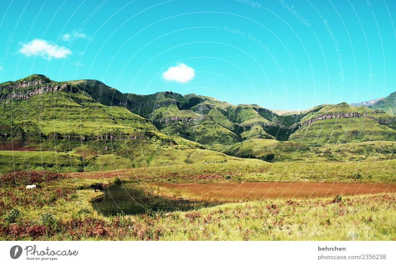 the great drakensberg mountains Vacation & Travel Tourism Trip Adventure Far-off places Freedom Nature Landscape Sky Clouds Tree Bushes Mountain