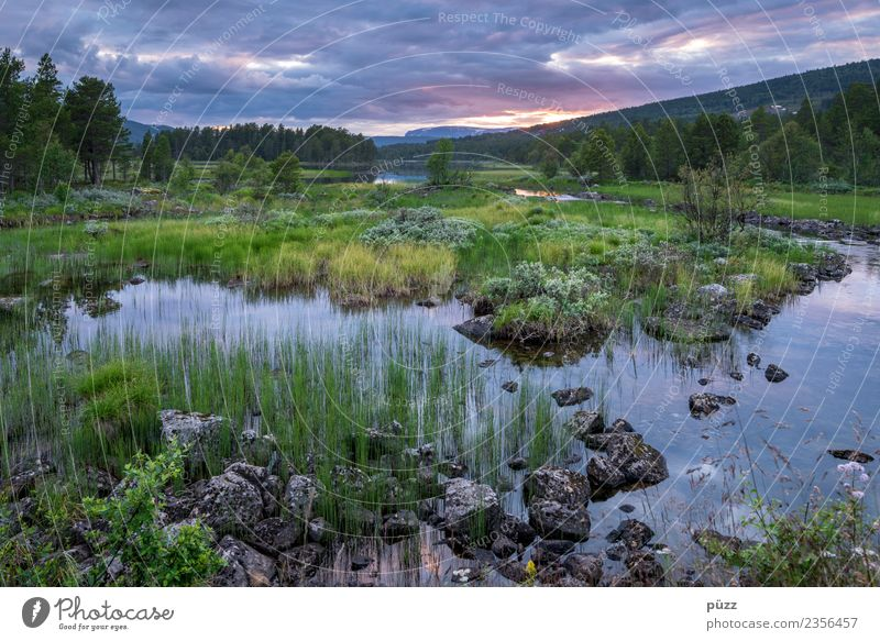 dusk Environment Nature Landscape Water Sky Clouds Summer Tree Grass Bushes Field Forest River bank Lake Norway Hiking Blue Green Emotions Contentment Beautiful