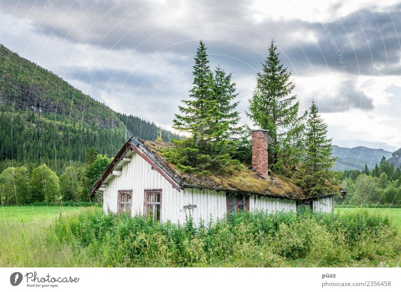 roof garden Environment Nature Landscape Plant Tree Moss Meadow Field Forest Norway Deserted House (Residential Structure) Hut Roof Wood Growth Green Sadness
