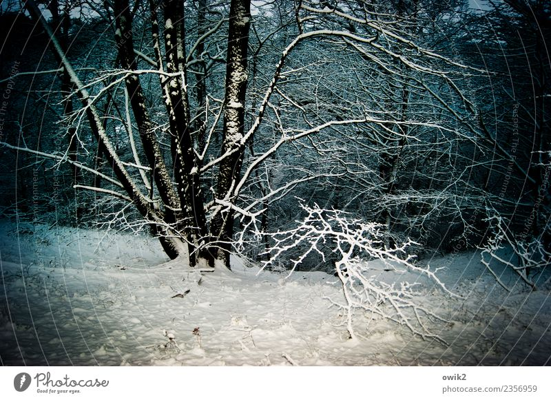 submerged Environment Nature Landscape Plant Winter Beautiful weather Ice Frost Snow Tree Twigs and branches Forest Illuminate Cold Patient Calm Idyll
