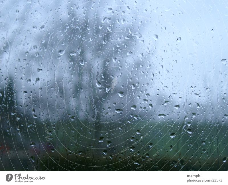 It's raining ... tree unsharp rain raindrops pane window glass window pane rainy X