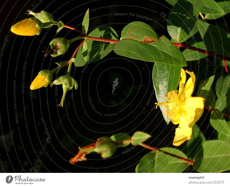 Yellow Flowers Green Garden Bed (Horticulture) Leaf Blossom Bud bloom X