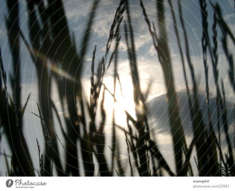 Sky Sun Clouds Grass Field Wayside