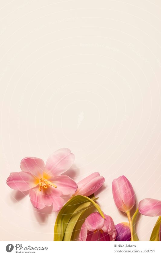 Nature Plant Flower Relaxation Calm Life Background picture Blossom Spring Love Feasts & Celebrations Pink Design Contentment Decoration Fresh