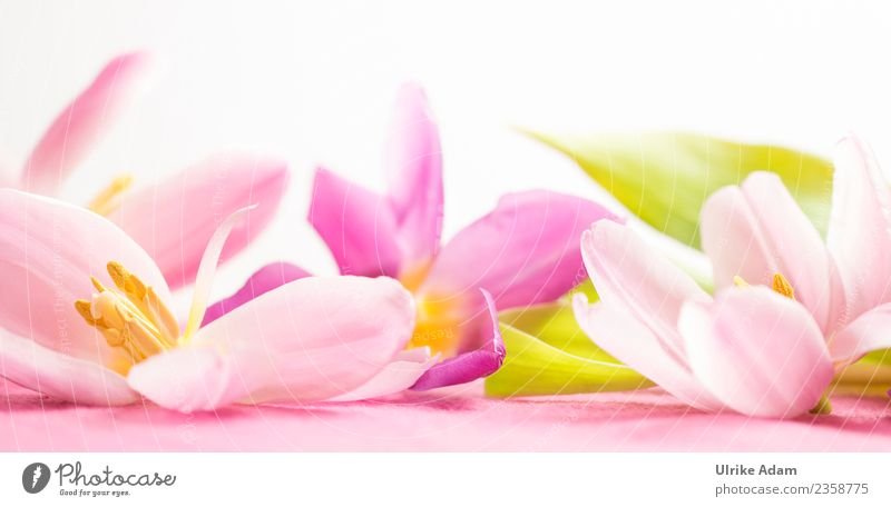 Wellness with pink tulip flowers Design Life Harmonious Well-being Contentment Relaxation Calm Meditation Spa Massage Swimming pool Image Pattern Mother's Day