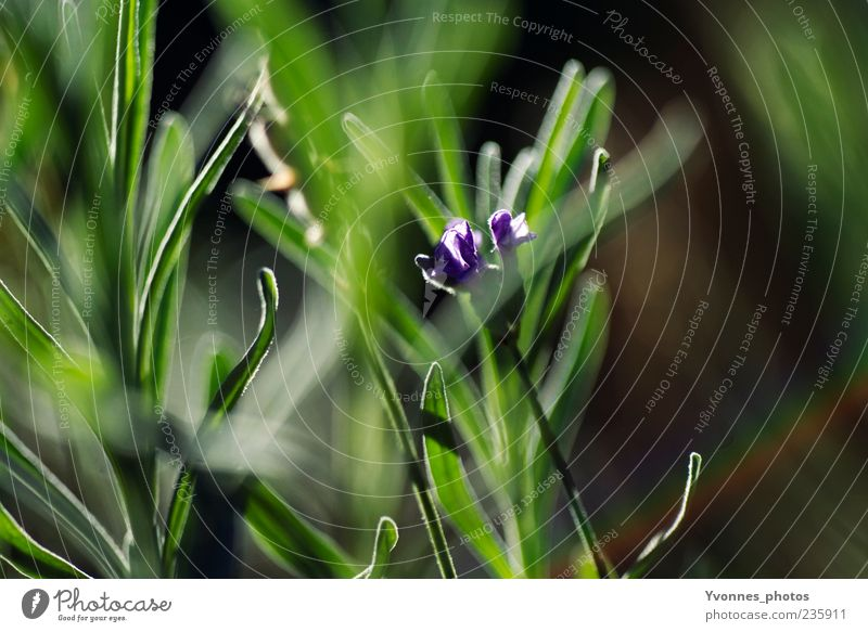 grass whispering Environment Nature Plant Spring Summer Flower Leaf Blossom Foliage plant Wild plant Growth Fresh Green Violet Colour photo Exterior shot