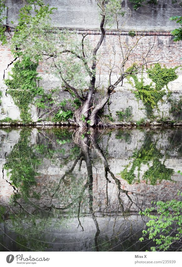 Nature Water Tree Plant Dark Wall (building) Wall (barrier) Lake Exceptional Growth River Creepy River bank Pond Brook Reflection