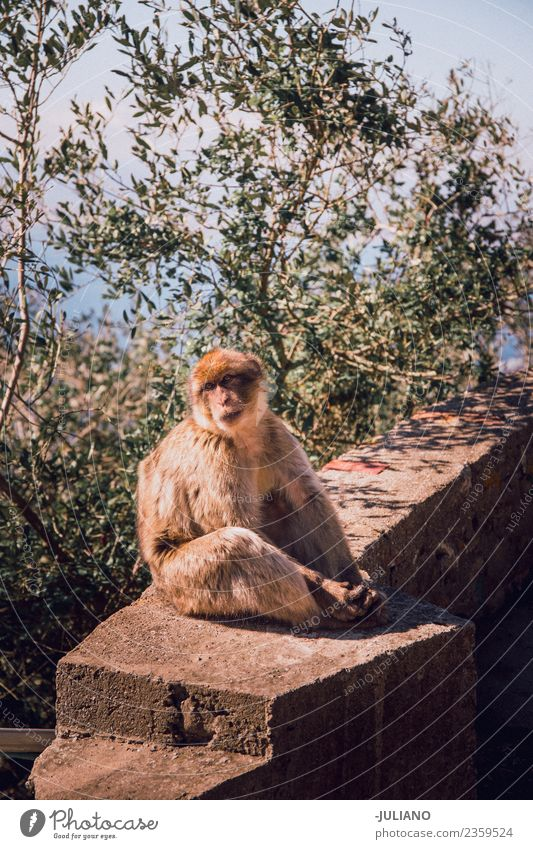 Monkey is sitting on wall Nature Vacation & Travel Summer Animal Lifestyle Natural Freedom Wild Adventure Memory