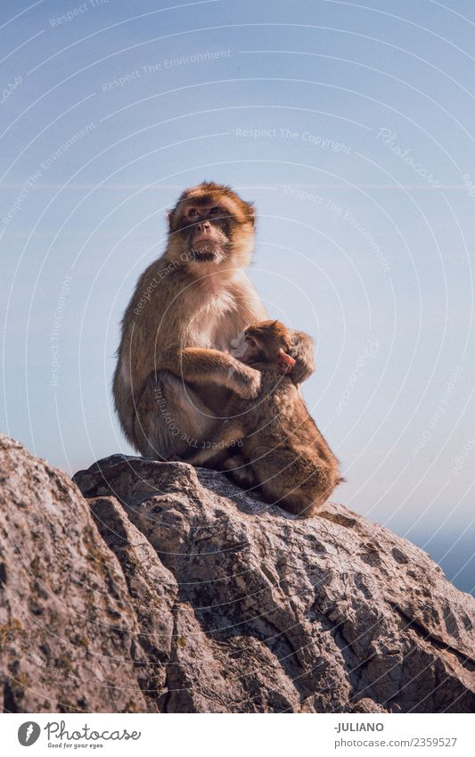 Young monkey mother with her baby Lifestyle Summer Adventure Animal Freedom Monument Nature Exterior shot Vacation & Travel Wild Monkeys Baby Sweet