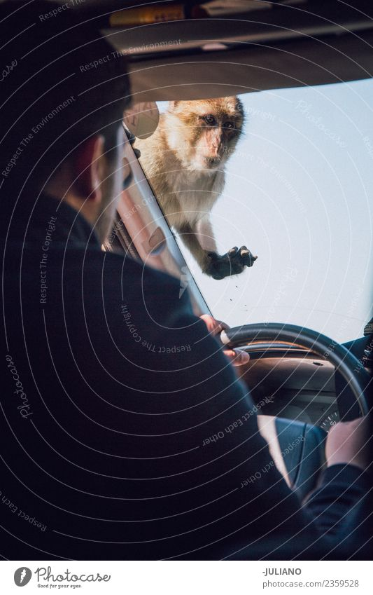 monkey is sitting on a driving car Lifestyle Summer Adventure Animal Freedom Monument Nature Exterior shot Vacation & Travel Wild