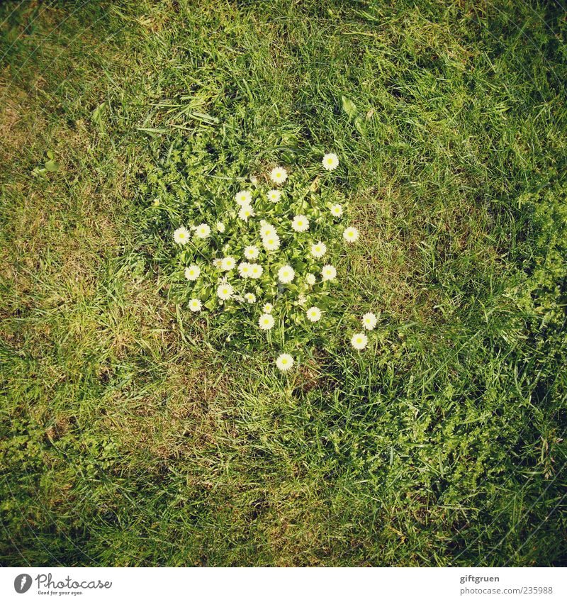 meeting point Environment Nature Plant Earth Spring Summer Flower Grass Leaf Blossom Foliage plant Garden Meadow Blossoming Growth Daisy Flowering plant Lawn