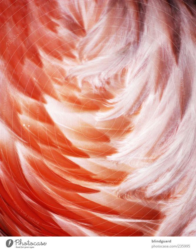 White Animal Orange Pink Wild animal Feather Soft Delicate Dry Zoo Metal coil Bird Plumed Flamingo Metalware