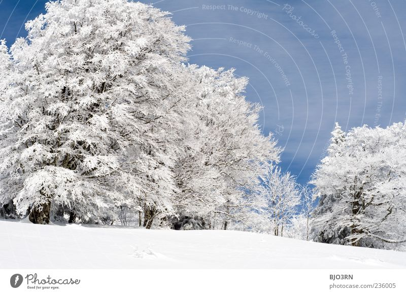 Sky Blue White Tree Winter Clouds Forest Landscape Meadow Cold Snow Mountain Gray Ice Weather Climate