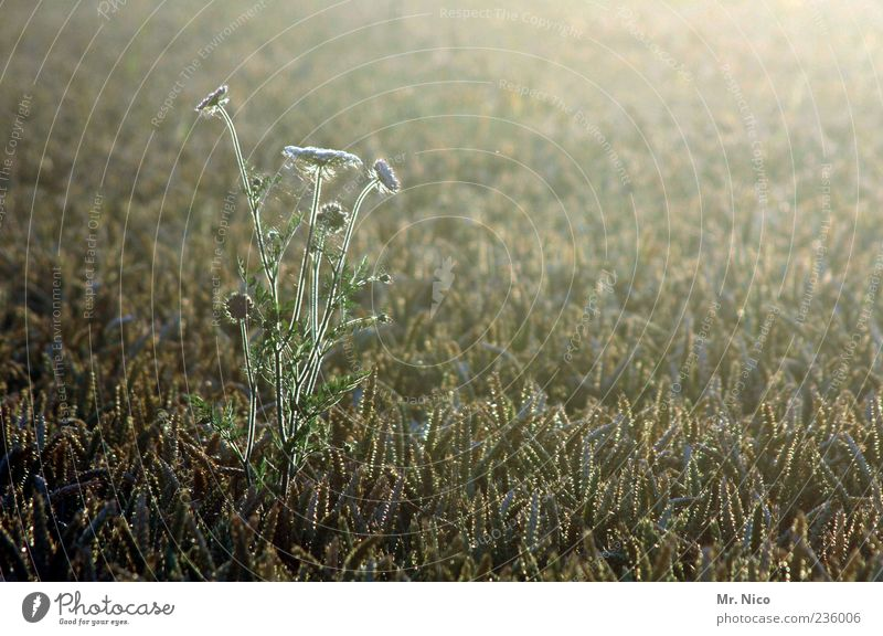 Nature Plant Summer Loneliness Calm Environment Landscape Life Warmth Grass Contentment Field Wild Climate Growth Idyll