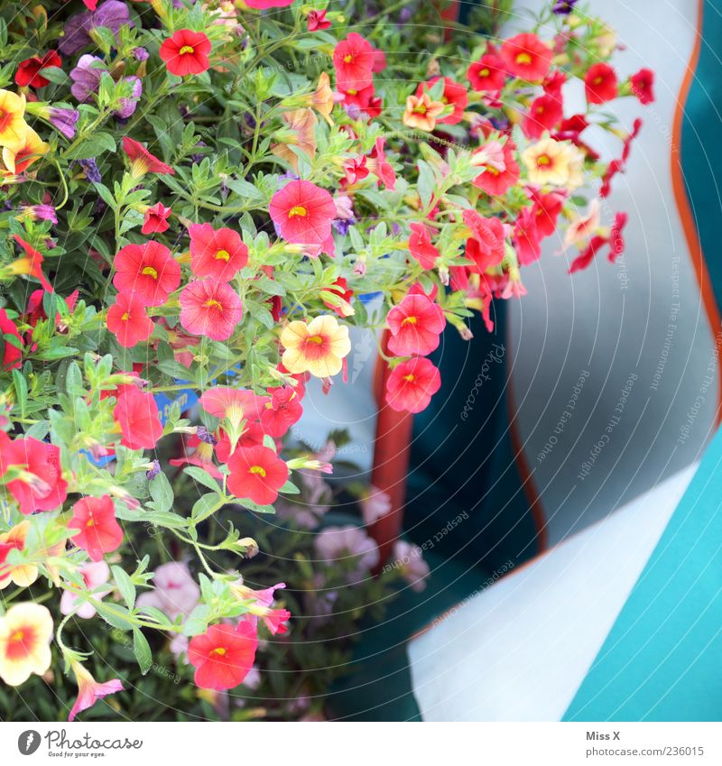 colorful flowers Plant Flower Leaf Blossom Pot plant Blossoming Fragrance Growth Multicoloured Balcony plant Balcony furnishings Colour photo Exterior shot